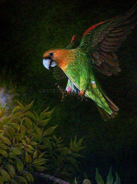 Cape Parrot Painting - ArtSavingWildlife