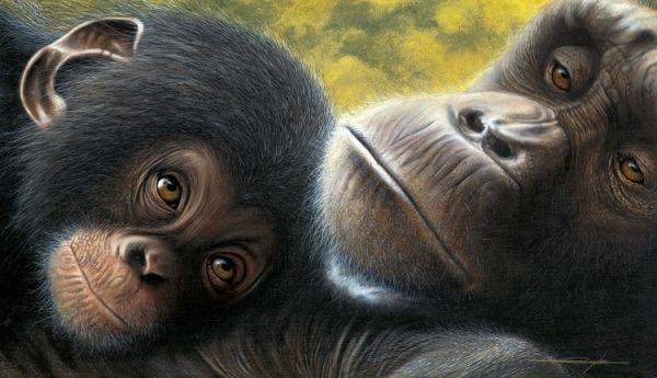 Chimpanzee painting by Daniel Taylor